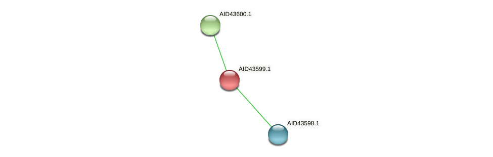 AID43599.1 protein (Staphylococcus xylosus) - STRING interaction network