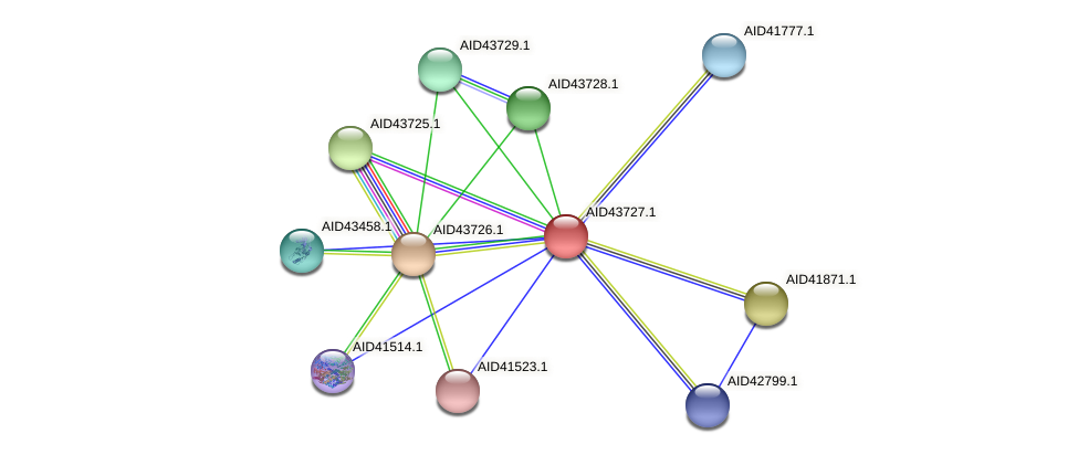 AID43727.1 protein (Staphylococcus xylosus) - STRING interaction network