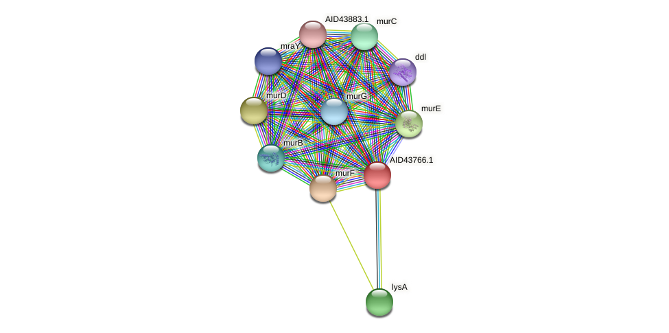 AID43766.1 protein (Staphylococcus xylosus) - STRING interaction network