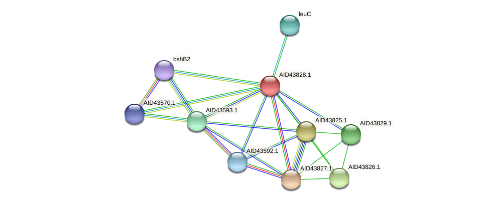 AID43828.1 protein (Staphylococcus xylosus) - STRING interaction network