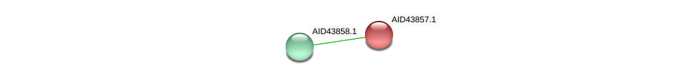 AID43857.1 protein (Staphylococcus xylosus) - STRING interaction network