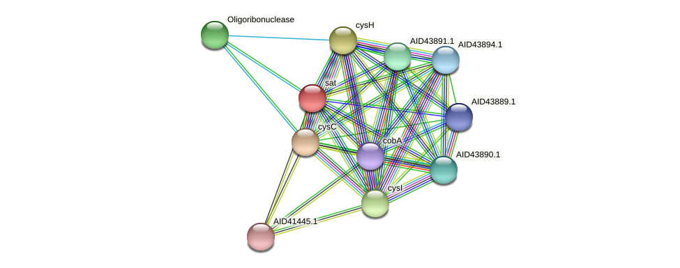 sat protein (Staphylococcus xylosus) - STRING interaction network
