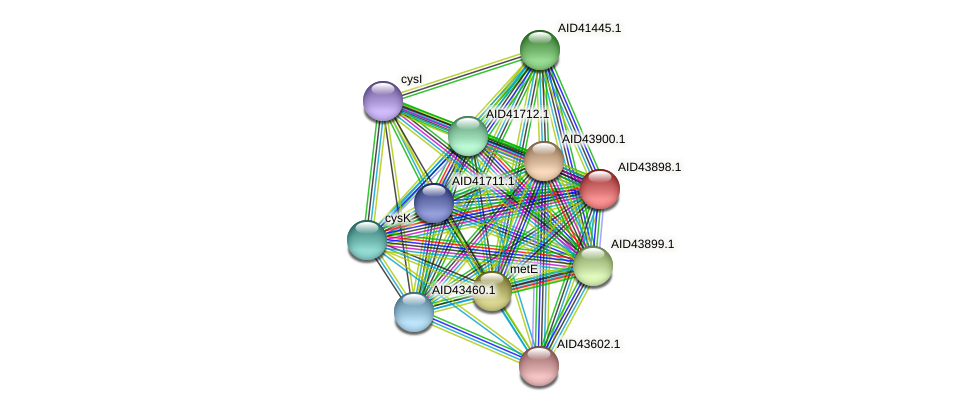 AID43898.1 protein (Staphylococcus xylosus) - STRING interaction network