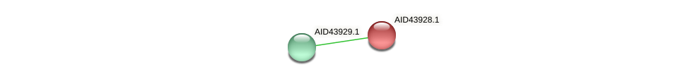 AID43928.1 protein (Staphylococcus xylosus) - STRING interaction network
