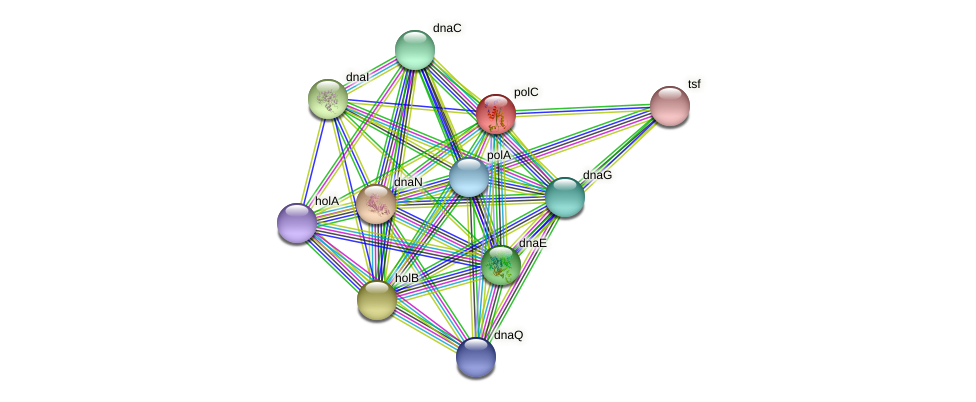 polC protein (Streptococcus pyogenes) - STRING interaction network