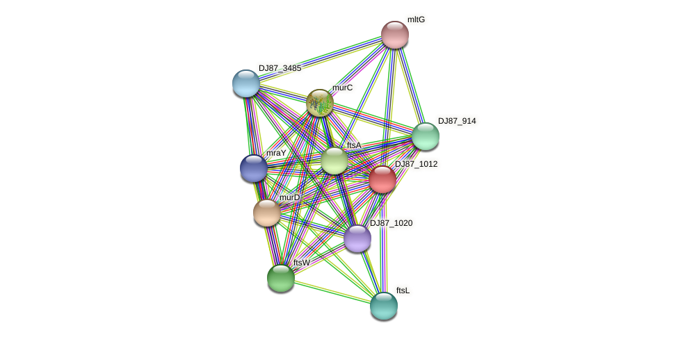 pbpB_1 protein (Bacillus cereus) - STRING interaction network