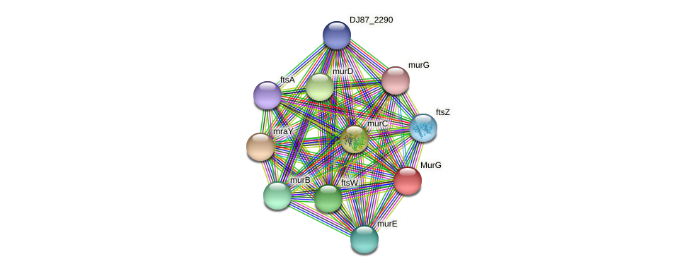murG_1 protein (Bacillus cereus) - STRING interaction network
