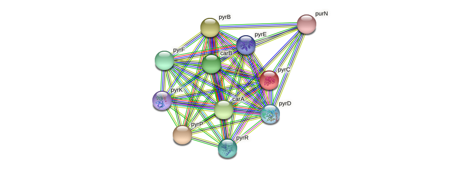 pyrC protein (Bacillus cereus) - STRING interaction network