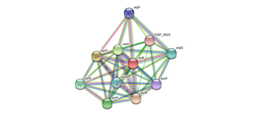 carB protein (Bacillus cereus) - STRING interaction network