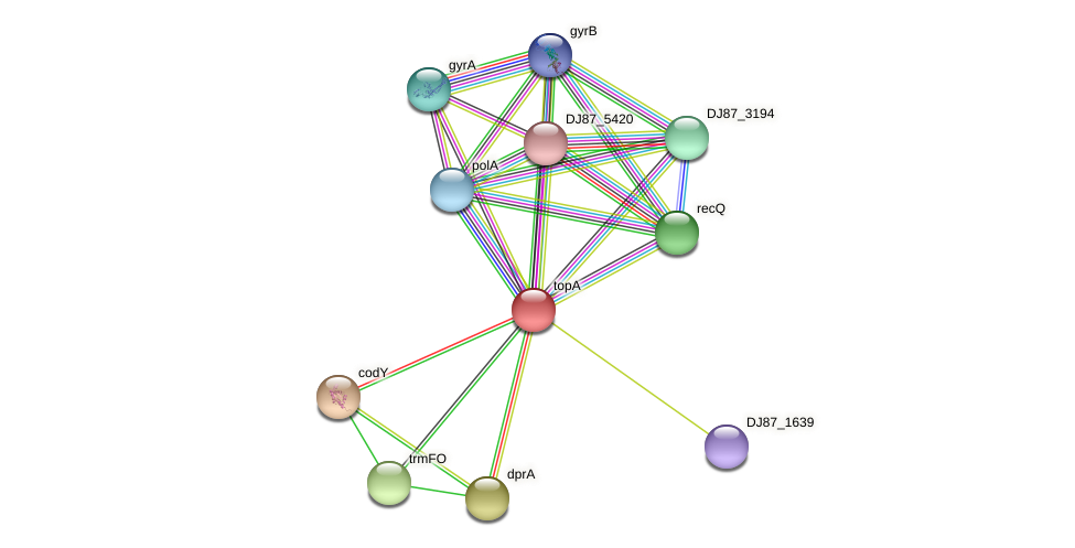topA protein (Bacillus cereus) - STRING interaction network