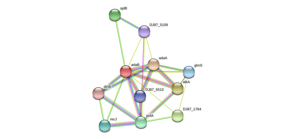 adaB protein (Bacillus cereus) - STRING interaction network