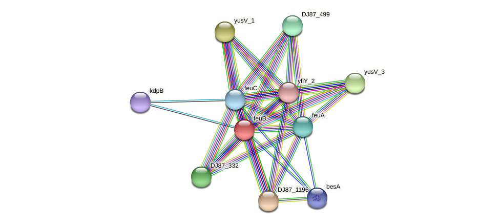 feuB protein (Bacillus cereus) - STRING interaction network