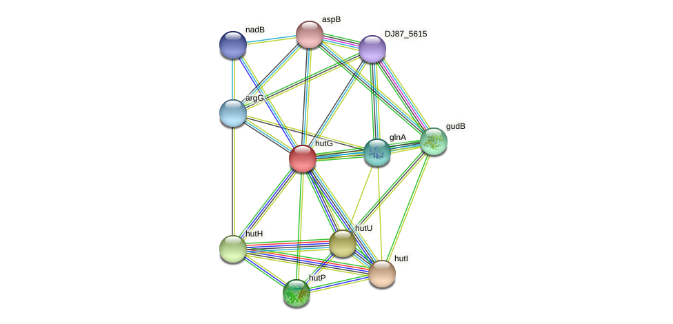 hutG protein (Bacillus cereus) - STRING interaction network