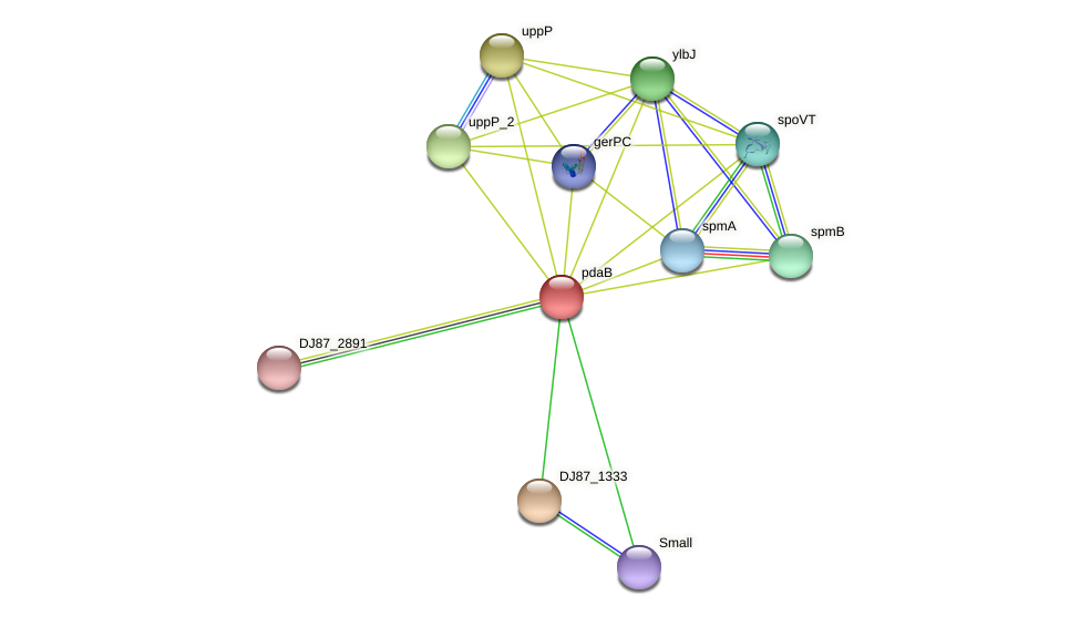 pdaC_1 protein (Bacillus cereus) - STRING interaction network