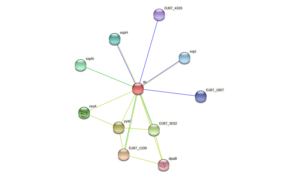 tlp protein (Bacillus cereus) - STRING interaction network