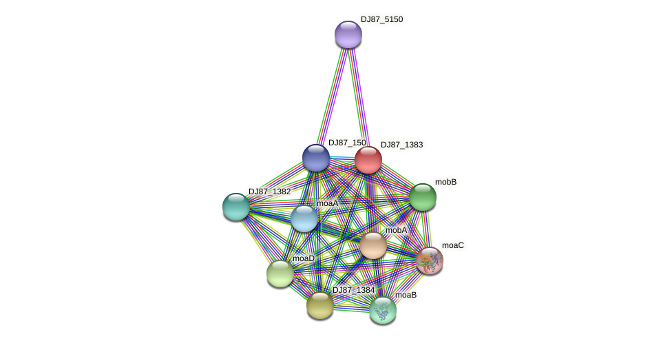 moeA_1 protein (Bacillus cereus) - STRING interaction network