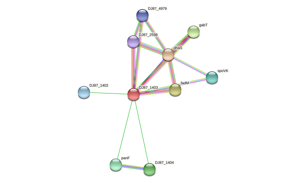 betB_1 protein (Bacillus cereus) - STRING interaction network