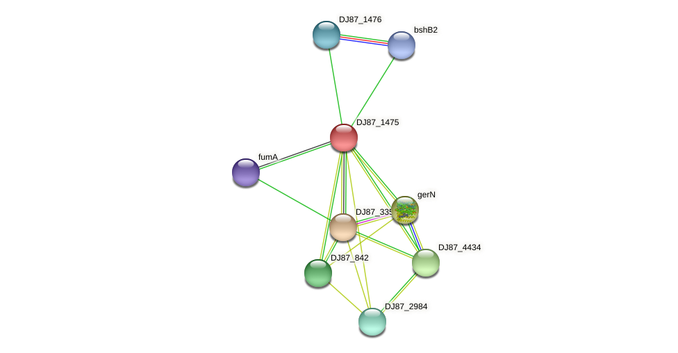 nhaD protein (Bacillus cereus) - STRING interaction network