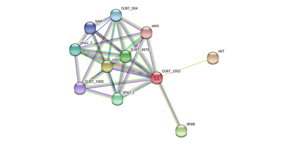 DJ87_1552 protein (Bacillus cereus) - STRING interaction network