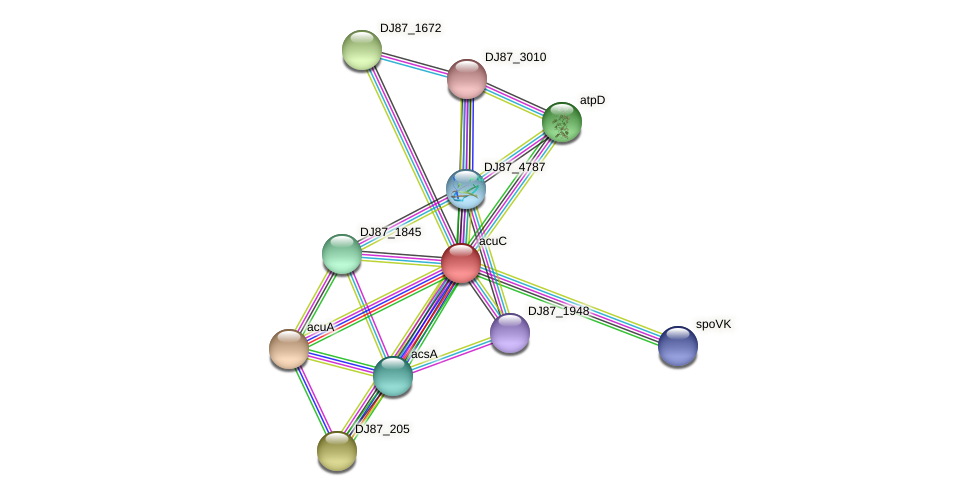 acuC_1 protein (Bacillus cereus) - STRING interaction network