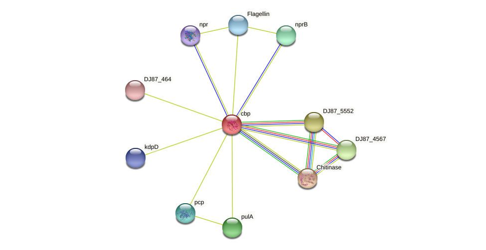 cbp protein (Bacillus cereus) - STRING interaction network