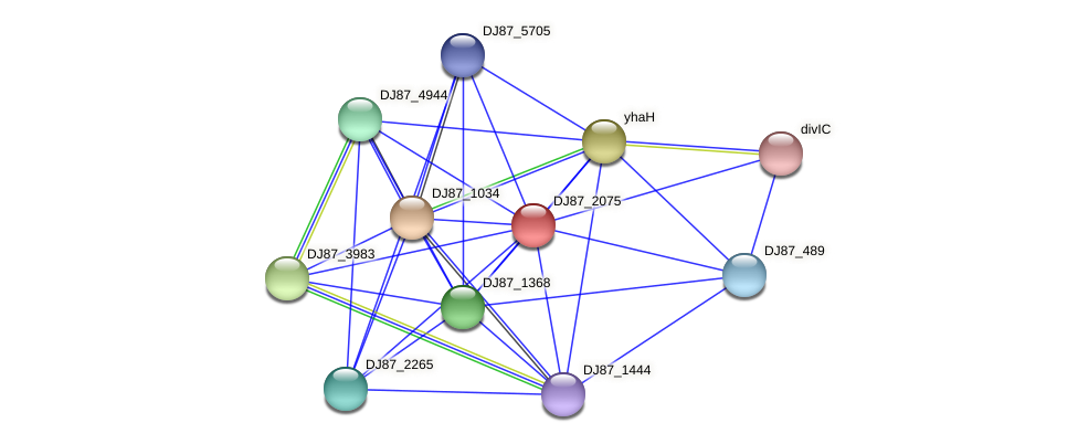 DJ87_2075 protein (Bacillus cereus) - STRING interaction network