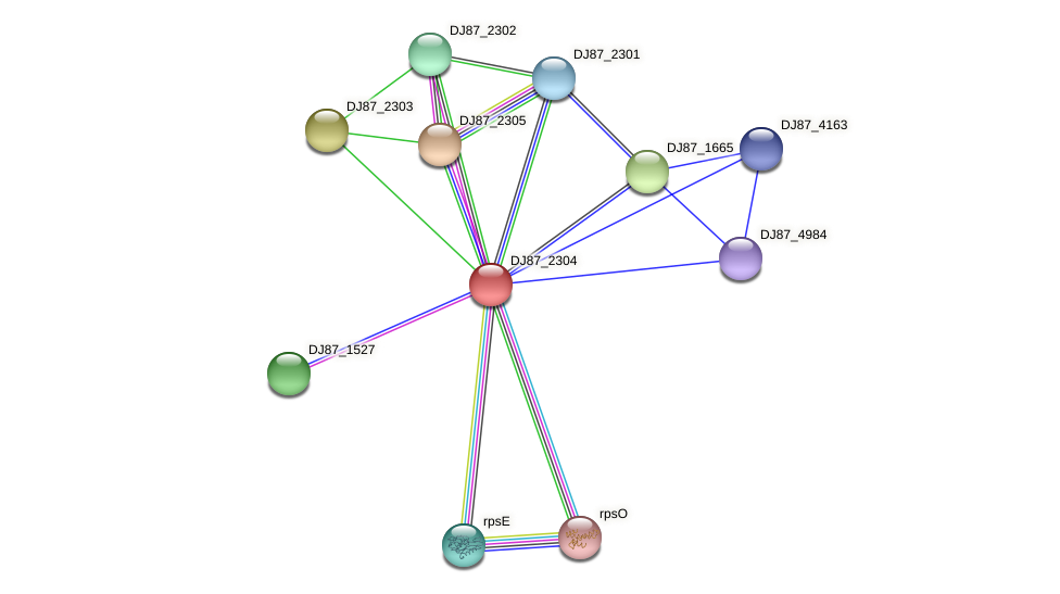 DJ87_2304 protein (Bacillus cereus) - STRING interaction network