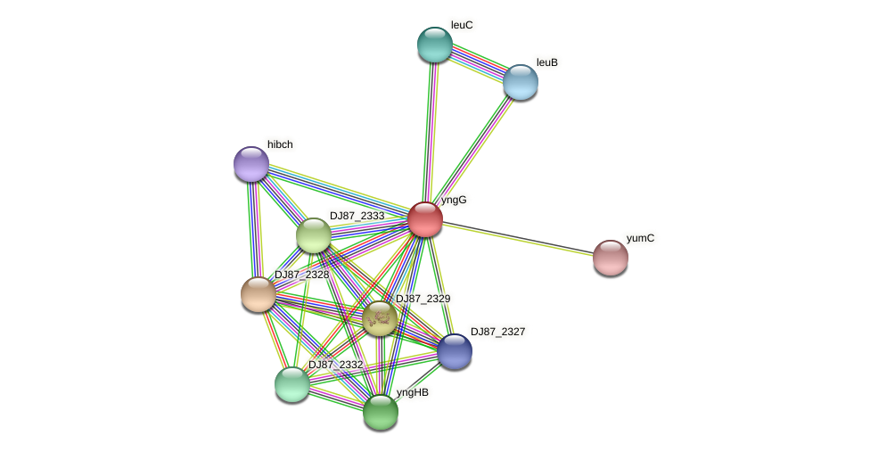 yngG protein (Bacillus cereus) - STRING interaction network
