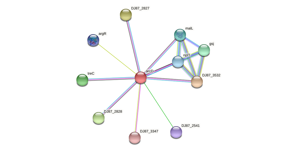 arcD protein (Bacillus cereus) - STRING interaction network