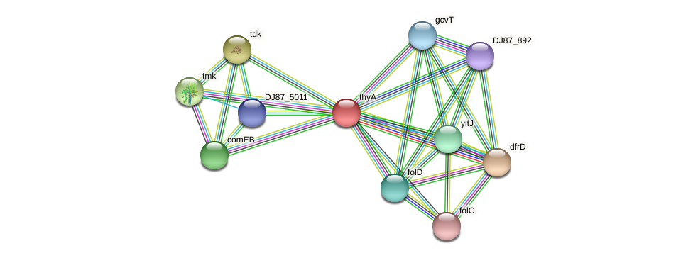 thyA protein (Bacillus cereus) - STRING interaction network