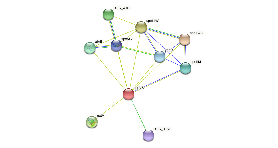 spoVS_2 protein (Bacillus cereus) - STRING interaction network