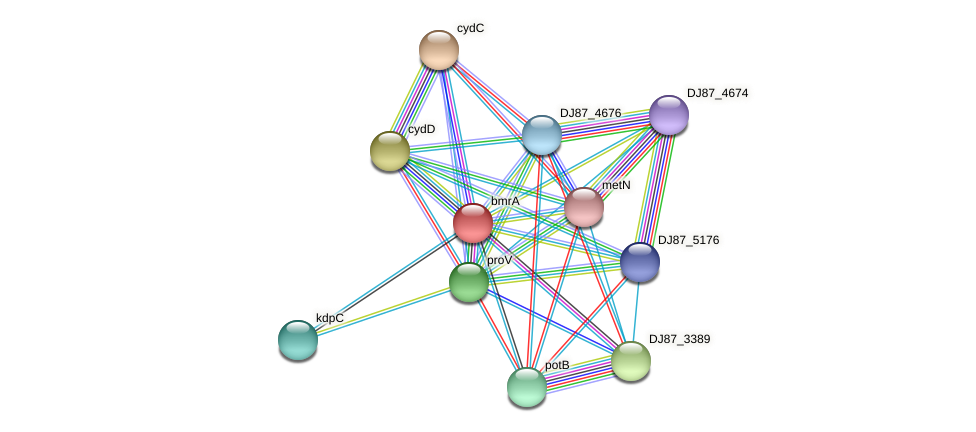 bmrA protein (Bacillus cereus) - STRING interaction network