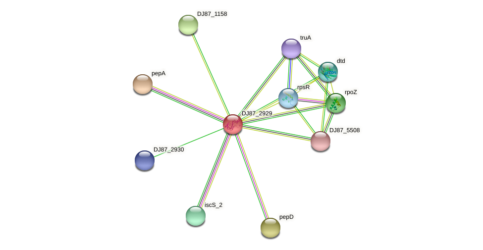 pepP protein (Bacillus cereus) - STRING interaction network