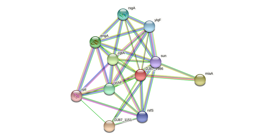 hflX_2 protein (Bacillus cereus) - STRING interaction network