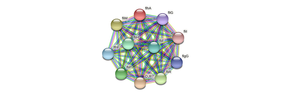flhA_1 protein (Bacillus cereus) - STRING interaction network