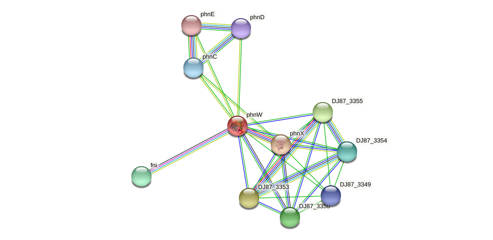 phnW protein (Bacillus cereus) - STRING interaction network