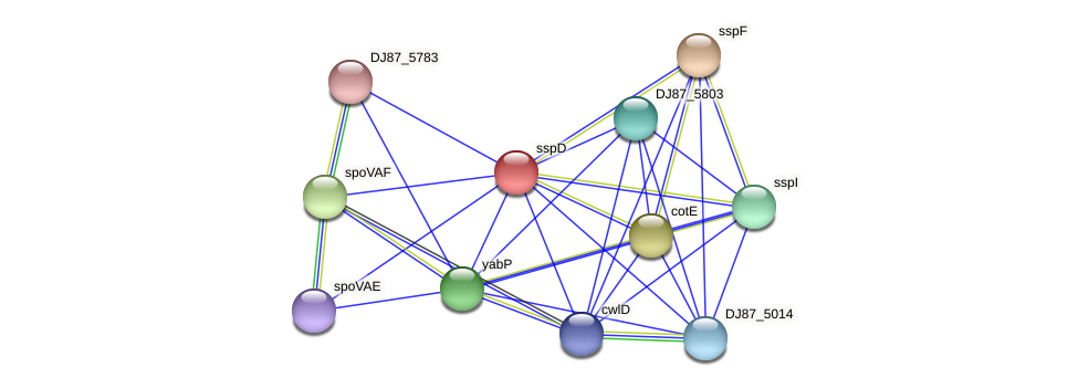 sspD protein (Bacillus cereus) - STRING interaction network