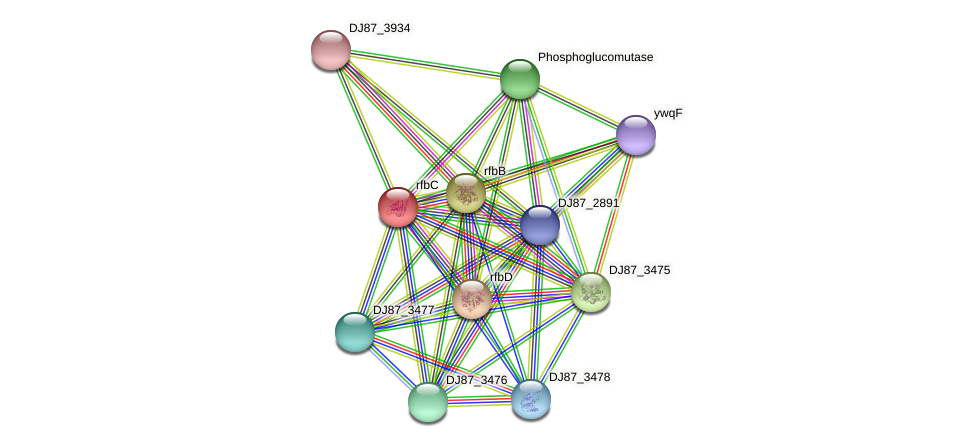 rfbC protein (Bacillus cereus) - STRING interaction network