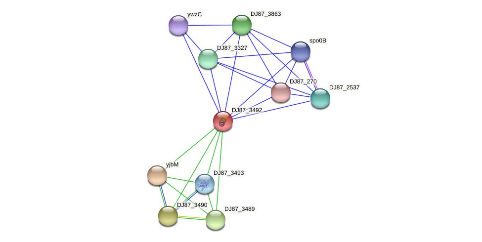 B4079_5741 protein (Bacillus cereus) - STRING interaction network