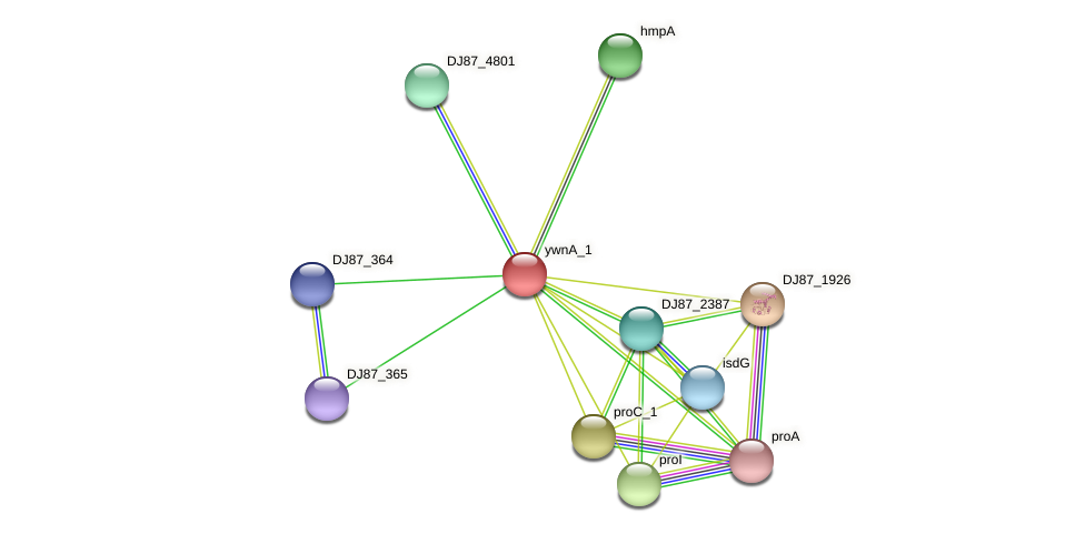 ywnA_1 protein (Bacillus cereus) - STRING interaction network
