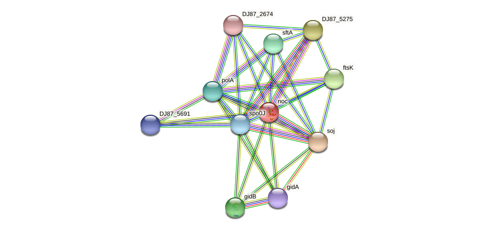 noc protein (Bacillus cereus) - STRING interaction network