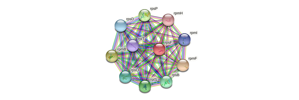 rpsF protein (Bacillus cereus) - STRING interaction network