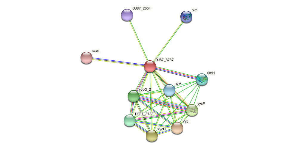 yycJ protein (Bacillus cereus) - STRING interaction network