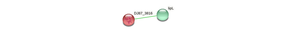 DJ87_3816 protein (Bacillus cereus) - STRING interaction network