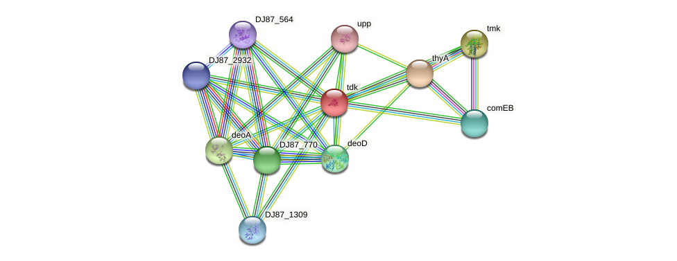 tdk protein (Bacillus cereus) - STRING interaction network