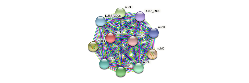 nuoL protein (Bacillus cereus) - STRING interaction network