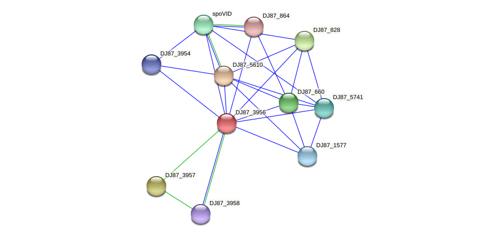 DJ87_3956 protein (Bacillus cereus) - STRING interaction network