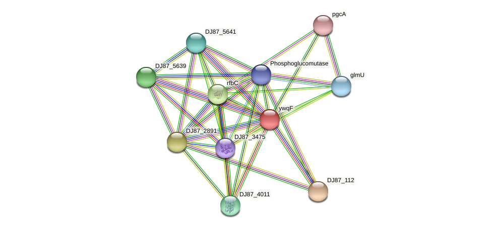 ywqF protein (Bacillus cereus) - STRING interaction network