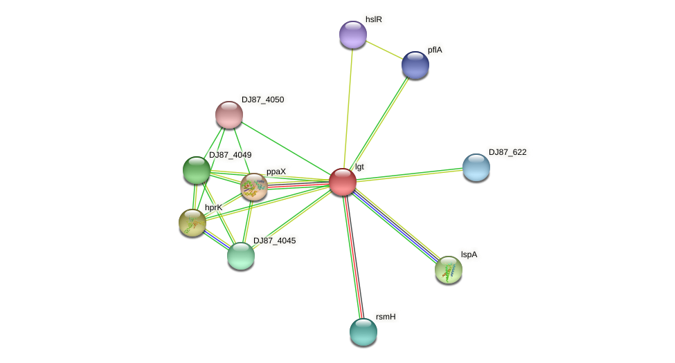 lgt protein (Bacillus cereus) - STRING interaction network