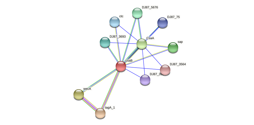 csaB protein (Bacillus cereus) - STRING interaction network